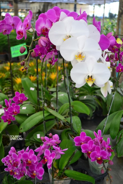 orchid10_resize
