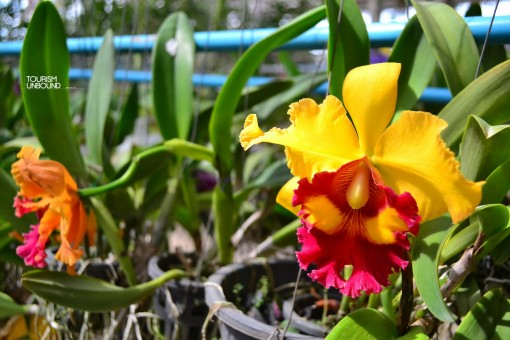 orchid6_resize