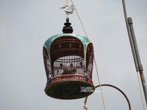 นกเขาชวา-เสียงใหญ่