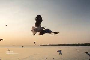 seagull-11