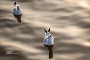seagull-15